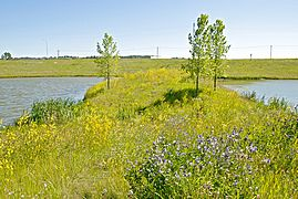 270_Westmount Storm Pond
